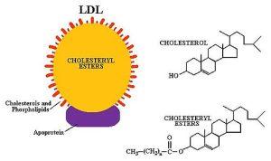 LDLand cholesterol molecule
