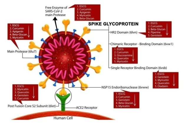 docking sites and polyphenols.png